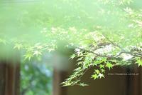 野沢温泉とその周辺いろいろ-