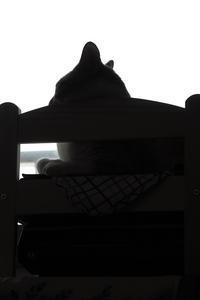 ねこブログ - ぎんネコ☆はうす