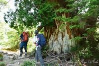 森を登る - Ryu Aida's Photo