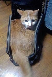 【猫】はまってます - 人生を楽しくイきましょう!