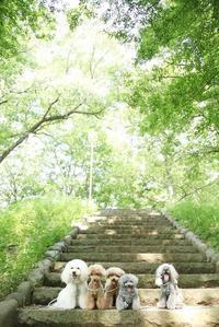 暑い日にお世話になった公園 - My time...5人の天使と Ⅱ