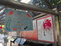 江戸川区自然動物園~水生コーナー【後編】 - 続々・動物園ありマス。