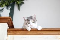 猫のあくび比べ - きょうだい猫と仲良し暮らし