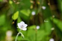 可愛い花 - 晴れ時々そよ風