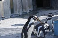 ペンギン・猿・(旭山動物園) - お茶にしませんか