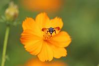 幸せの Blue Bee 2018 - 野山の住認たちⅡ