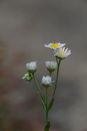 佐鳴湖畔の花 -