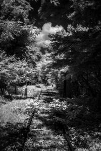 白く輝く林に消える鉄路 - Silver Oblivion