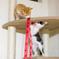 キャットタワーの思い出 2 - 猫と夕焼け