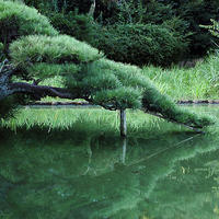 三渓園の夏、日本の夏三渓園散策18.07.21 07:35 - スナップ寅さんの「日々是口実」