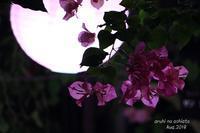 夜間鑑賞 - ある日の足跡