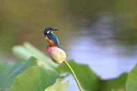 夏の水辺5 - 綺麗な野鳥たち