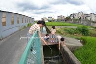 ザリガニ釣り - nyaokoさんちの家族時間