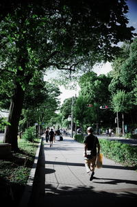 Tokyo Snap 21不忍池 - 花は桜木、