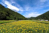 桂山のひまわり畑 ① - やきつべふぉと