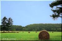 まきばの青い空 2 - 北海道photo一撮り旅
