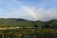 虹とひまわり - Noriko's Photo  -light & shadow-