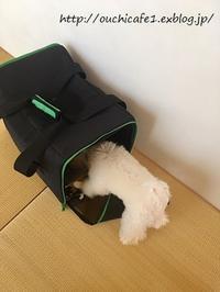 【IKEA】イケアで今までで購入してよかったもの3選♪&愛犬とのお出かけに便利なイケアのキャリー - 10年後も好きな家