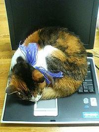 そうだったのか! - ご機嫌元氣 猫の森公式ブログ