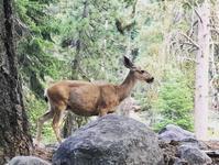 セコイヤ国立公園キャンプ1 - ビスケットの缶