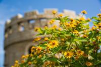 花と松山総合公園展望塔 - かたくち鰯の写真日記2