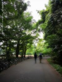 ポプラ並木 - Illusion on the Borderline  II @へなちょこ魔術師