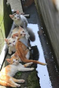 やよいちゃんちの猫ちゃんたち - 愛にゃんブログ