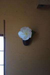 夕顔 - g's style day by day ー京都嵐山から、季節を楽しむ日々をお届けしますー
