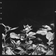 漆黒の夏空を仰ぐ向日葵の後ろ姿 - Film&Gasoline