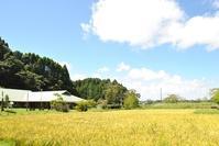 もういくつ寝ると~♪稲刈りだ~♪ - 千葉県いすみ環境と文化のさとセンター