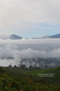 雲海と真夏のジョウビタキ - 花野鳥風月MISCHEH