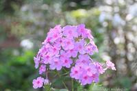 BARAKURA ENGLISH GARDEN ②庭園の花々 - 暮らしを紡ぐ