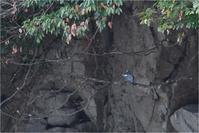 枝どまりのヤマセミ@広島県 - とことんデジカメ