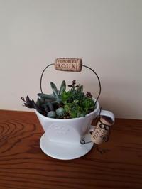 多肉植物の寄せ植え ワークショップ開催 第2回 - 柴犬 ひろゆきと さもない毎日&週末自宅カフェ里音 (りをん) 一之江・笑い療法士のいるカフェ