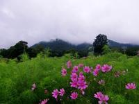 黒姫高原 ダリア園(長野県上水内郡信濃町) - 旅の記録