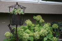多肉植物の魅せ方 - CHIROのお庭しごと
