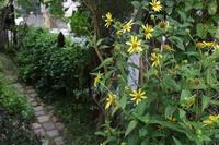 心配 - CHIROのお庭しごと