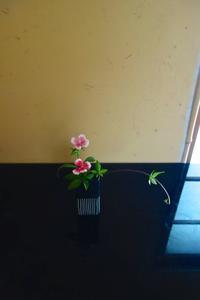 可憐なピンクの撫子 - g's style day by day ー京都嵐山から、季節を楽しむ日々をお届けしますー