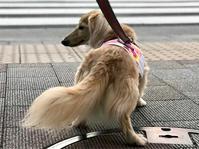 18年8月23日 あんちゃんへプレゼント! - 旅行犬 さくら 桃子 あんず 日記