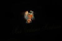 東方 ・・・・・ 伏見池 (Recollection) - みーすこるびじぇもんどりあん   -Mies Corbusier Mondrian-