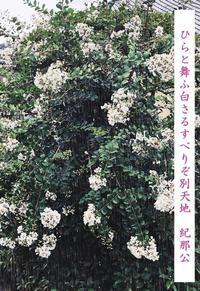 紀那公の写真俳句その8(霞ガラス越しの雪嵐) - 白雪ばぁばのかんづめ