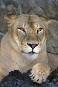 遊亀公園のライオンとトラ - 動物園放浪記