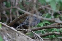 繁殖期のツミやオシドリ - 四十雀の欣幸 ~野鳥写真日記~
