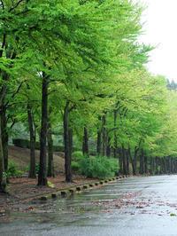 #1232樹木公園 - 想い出cameraパートⅢ