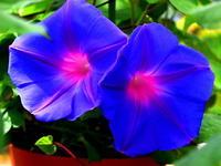 🌼 花園でお花を 🌼 - 星の小父さまフォトつづり