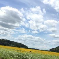 向日葵畑と雲^_^v - ~おざなりholiday's^^v~ <フィルムカメラの写真のブログ>