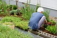 萎れた草花を集める白髪老人と東京都立大の復活 - 照片画廊