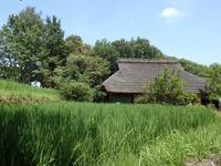 『木曽川水園の風景と植物や生き物達・・・・・』 - 自然風の自然風だより