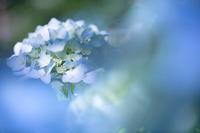 紫陽花!~三千院~ - Prado Photography!