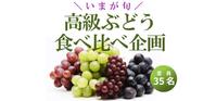 イベント案内|高級ぶどう食べくらべ企画|9月25日(火)開催 - 野菜ソムリエコミュニティ 札幌